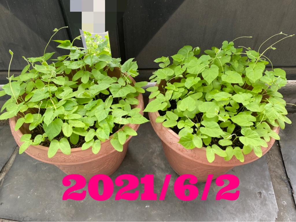 20210603-103041.jpg