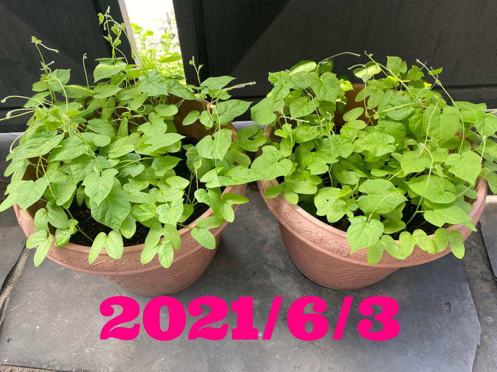 20210603-103052.jpg