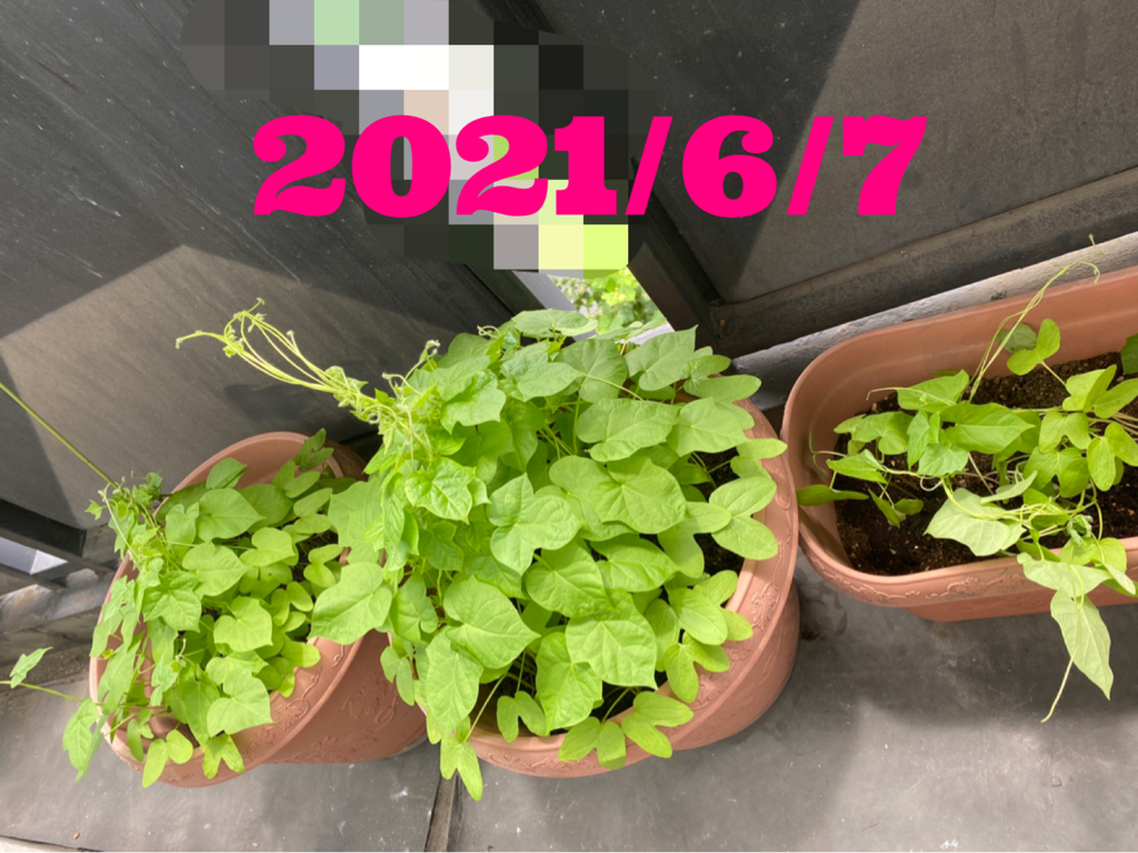 20210610-072628.jpg