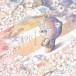 3ピースバンド・saji、新生活を応援するミニアルバムの魅力に迫る!
